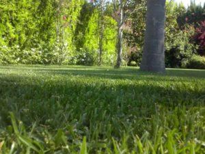 Jardinería en Lanzarote